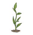 cartoon green sprout vector image vector image