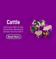 cattle concept banner isometric style vector image
