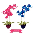 colorful orchids in pot vector image