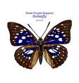 great purple emperor sasakia charonda hand draw vector image