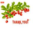 greeting card with a branch of lingonberry vector image vector image