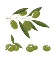 set of white Olives with leafs vector image vector image