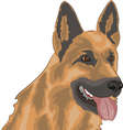 Shepherd vector image vector image