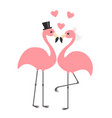 two pink flamingo set wedding couple bride and vector image