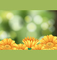 background scene with yellow flowers in garden vector image vector image