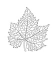Black on white grape leaf line art vector image