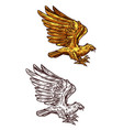 eagle gold heraldic falcon or hawk bird vector image