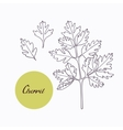 Hand drawn chervil branch with leaves isolated on vector image