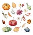 thanksgiving set colorful pumpkins vector image vector image