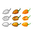 whole and half pepper habanero color vector image vector image