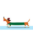 dachshund dressed in green pullover skating along vector image vector image
