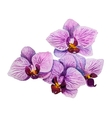 Orchid flower Watercolor floral vector image