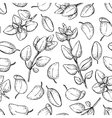 Oregano drawing Seamless pattern Isolated vector image vector image