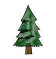 pine tree foliage trunk forest vegetation icon vector image vector image