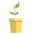 potted plant icon flat isolated vector image