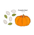 pumpkin seed hand draw vector image vector image