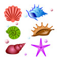 sea shells symbols collection set vector image vector image
