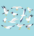 set beautiful seagulls in a flat style vector image vector image