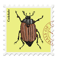 cockchafer vector image vector image