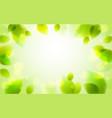 fresh green leaves summer or spring blurred vector image vector image
