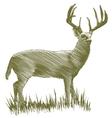 Woodcut Deer vector image vector image