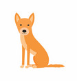australian dog dingo sitting vector image vector image