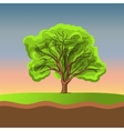Big tree on sunset vector image vector image