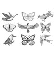 collection of colorful butterfly insects and birds vector image vector image