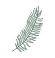 drawing palm leaf vector image