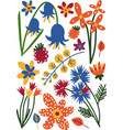 beautiful colorful wild or garden blooming flowers vector image vector image