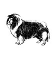 hand drawn dog collie vintage vector image vector image