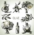 Hand drawn olive set vector image