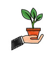 hand with pot plant growth business finance vector image vector image