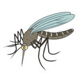 funny mosquito vector image vector image