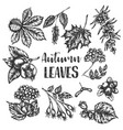 autumn leaves hand drawn vector image