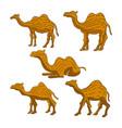 camel animal design vector image