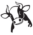 head cartoon cow vector image