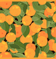 orange mandarin tangerine with green leaves on vector image vector image