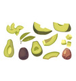 set of avocado whole diced or sliced pieces vector image vector image