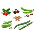 Coffee peanuts green pea pods and beans vector image vector image