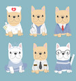 cute flat style french bulldog in career costume vector image vector image