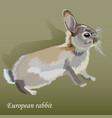 cute realistic little european rabbit vector image vector image