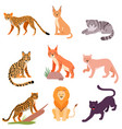 set different wild cats on vector image