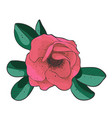 branch of blossoming dogrose flower of eglantine vector image vector image