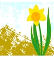 card with one single daffodil vector image vector image