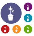 hemp in pot icons set vector image vector image