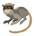 imperial tamarin icon cartoon style vector image vector image