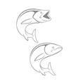 king mackerel vector image vector image