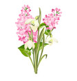 purple lilac flowers of syringa and white vector image vector image