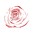 abstract sketch red rose effect a watercolor vector image vector image